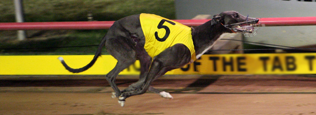 Australian Greyhound racing odds: Group and Listed races calendar for July 2013